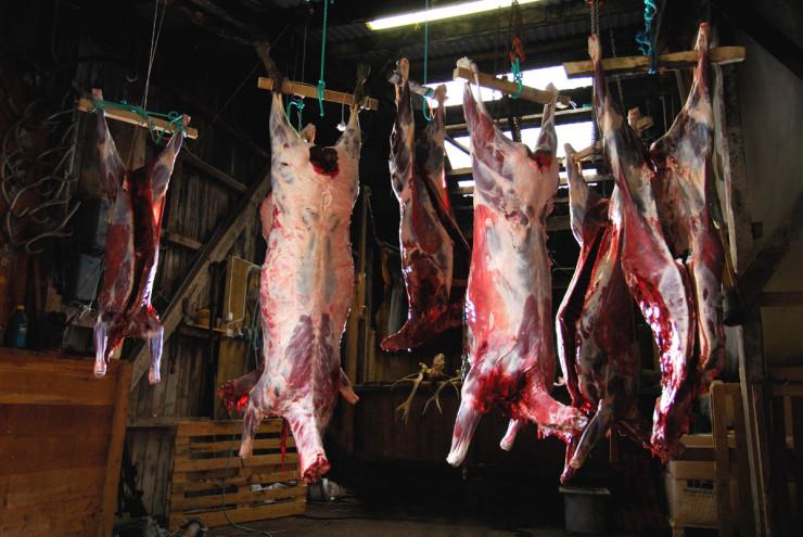 Tips for behandling av viltkjøtt