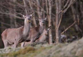 Færre felte hjort i jaktåret 2012/13