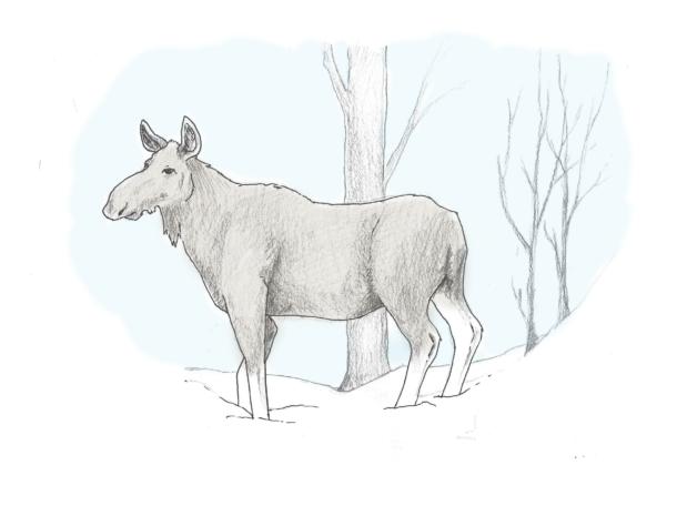 elg-oppmerksom-2