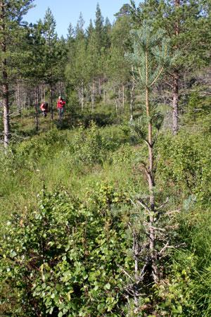 skoger enslig møte single i rødøy