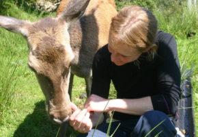 Hjortens spisevaner endrer livet i skogen