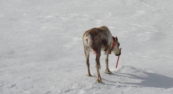 Norsk versjon av rapport om skrantesjuke