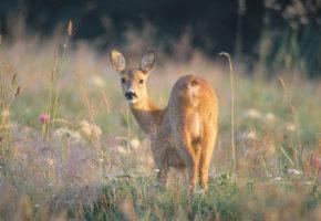 8 800 hjortevilt drept i trafikken