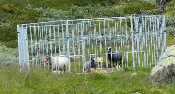 Innfører strengere regler for å hindre smitte av skrantesjuke i Nordfjella