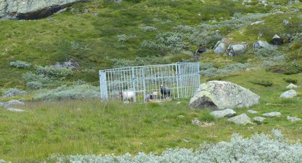 Mattilsynet trapper opp tilsyn med grinder i Nordfjella